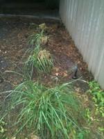 Tulsa Irrigation Systems April 12